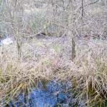 Oberflächenwasser im Februar 2015